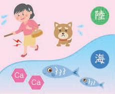 健康コラム②骨におけるカルシウムの役割