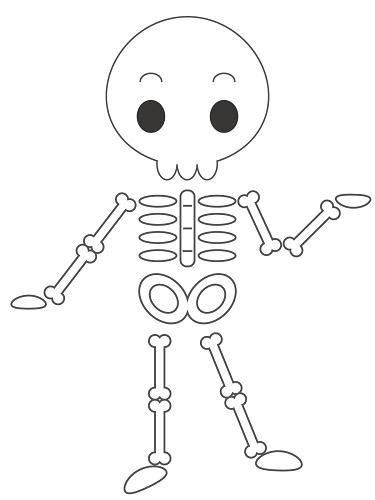 人間の骨で一番大きな骨は?【骨活クイズ】